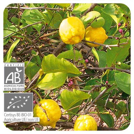 Pranarom Aceite Esencial Limón 10 ml