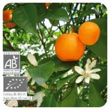 Pranarom Aceite Esencial Mandarina 10 ml